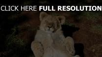 chaton lion yeux fermés amusant