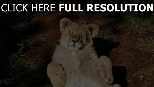 fond d'écran hd chaton lion yeux fermés amusant