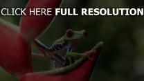 grenouille pétale arrière-plan flou tropical