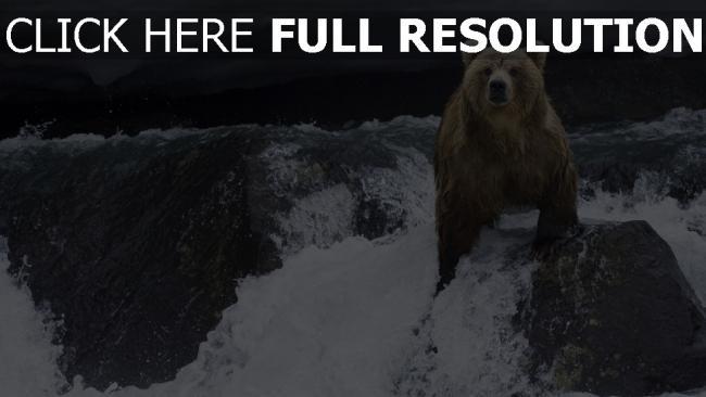 fond d'écran hd ours rivière alaska nuageux