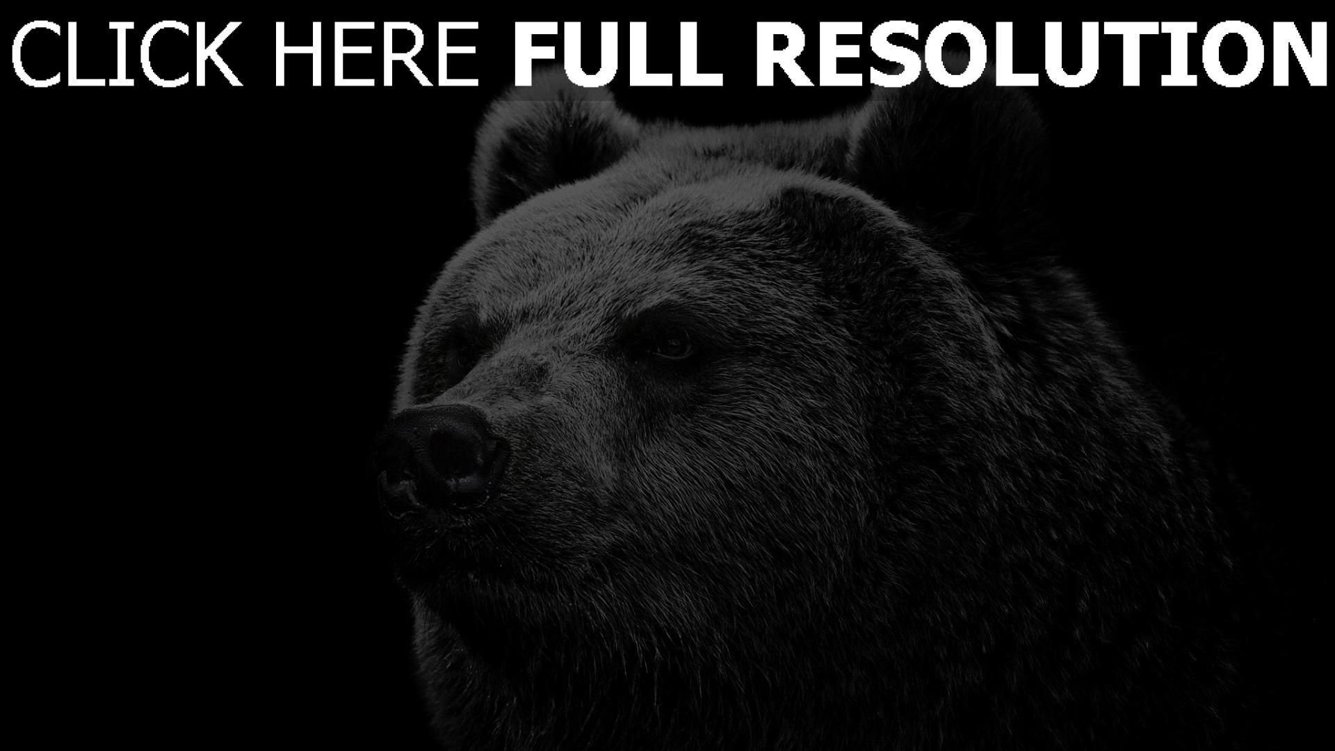 fond d'écran 1920x1080 ours museau gros plan noir et blanc