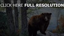 ours automne sibérie arbre