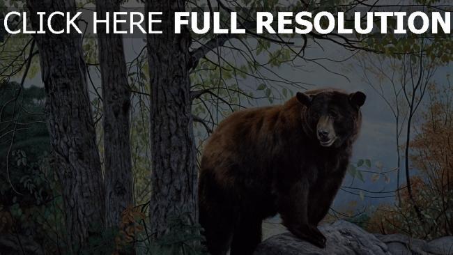 fond d'écran hd ours automne sibérie arbre