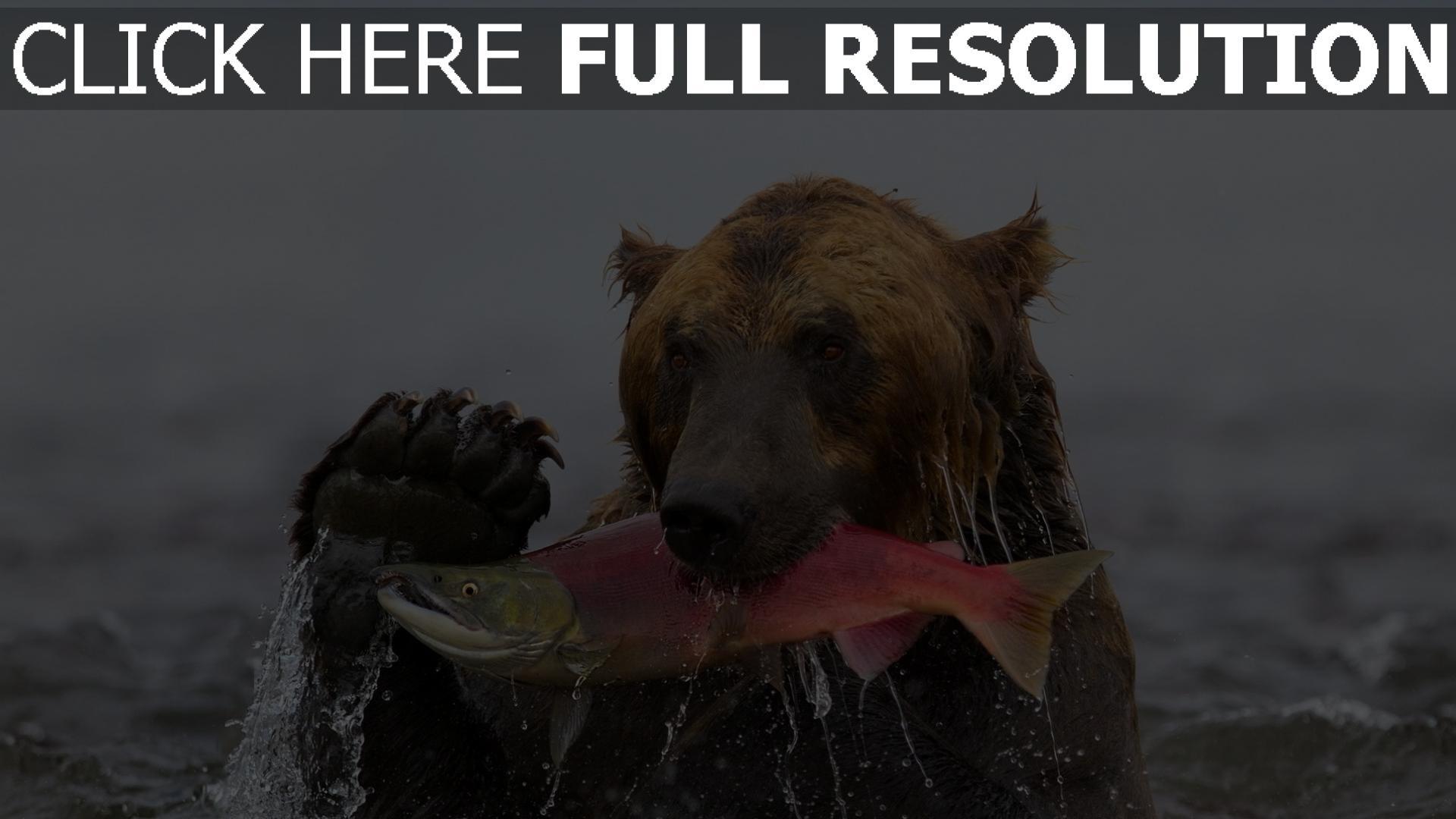 fond d'écran 1920x1080 ours humide pêche poisson