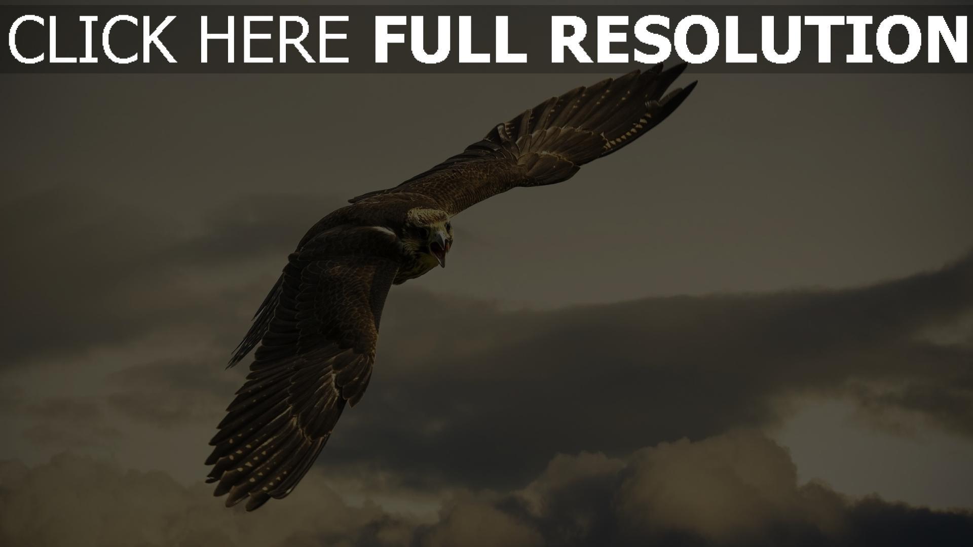 fond d'écran 1920x1080 faucon aile vol nuageux