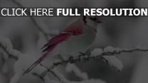 oiseau rose branche enneigé