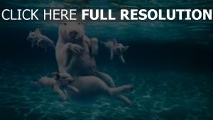porc sous l'eau piscine