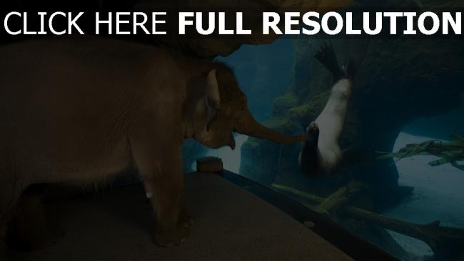 fond d'écran hd éléphant phoque aquarium amis