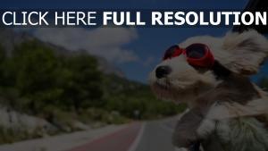lunettes de soleil arrière-plan flou chien amusant