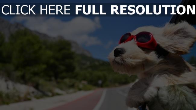 fond d'écran hd lunettes de soleil arrière-plan flou chien amusant