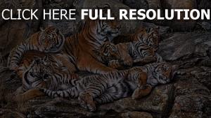 tigre troupeau rock