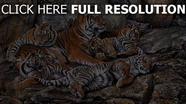 fond d'écran hd tigre troupeau rock