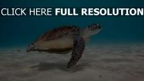 tortue sous l'eau vue de côté