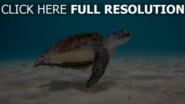 fond d'écran hd tortue sous l'eau vue de côté