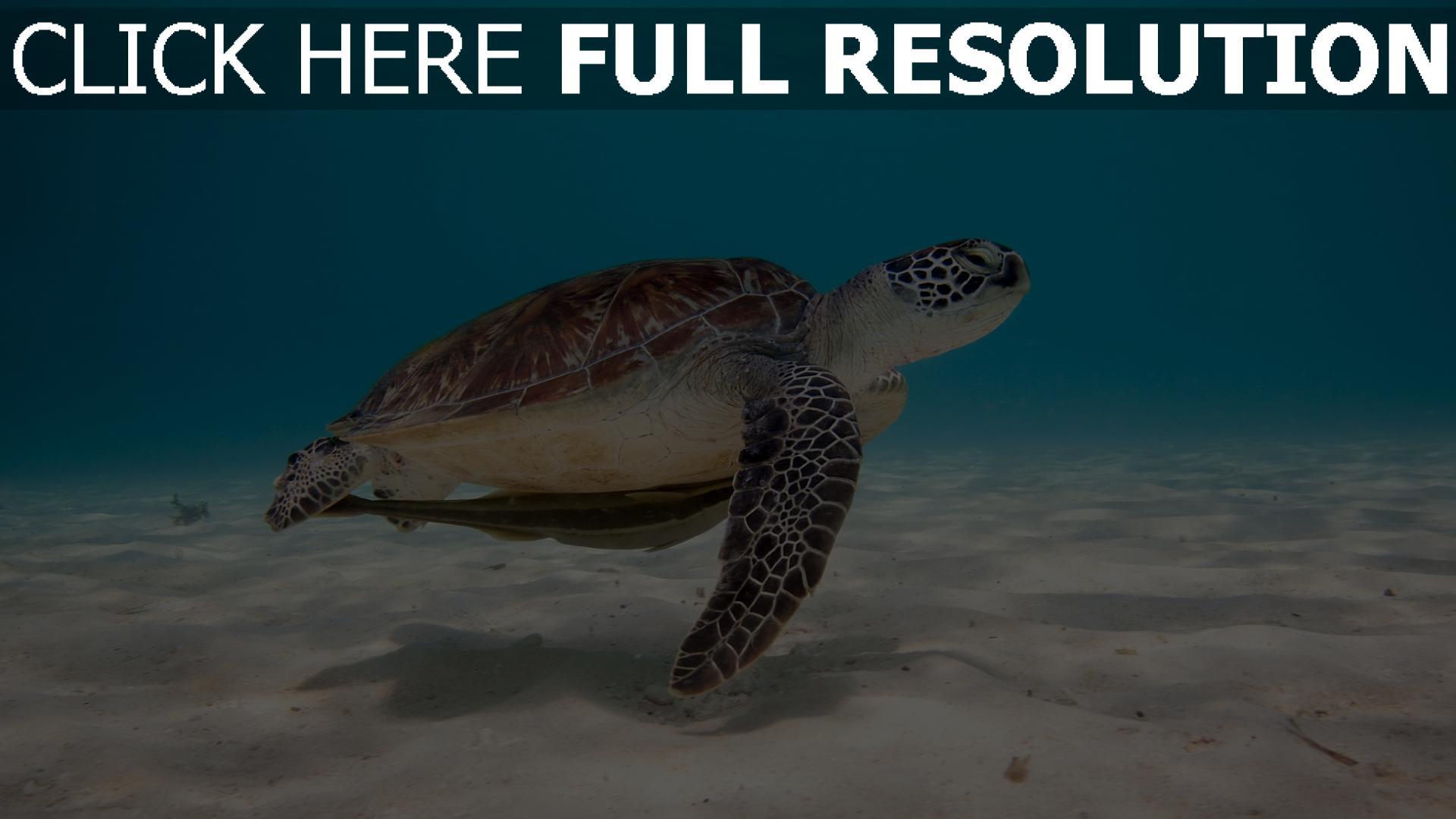 fond d'écran 1920x1080 tortue sous l'eau vue de côté