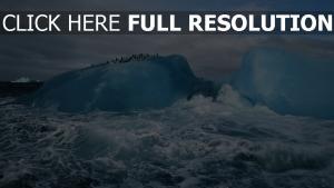 iceberg tempête pingouin