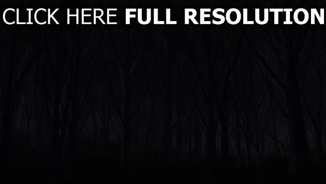 fond d'écran hd forêt foncé terrible silhouette