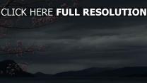 sakura branche gros plan japon