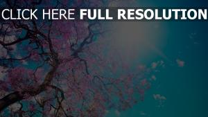 sakura arbre ciel