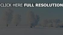 hiver arbre givre danemark