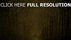chemin arbre automne romantique