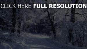 forêt givre route finlande
