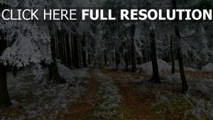 forêt givre chemin allemagne