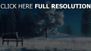 arbre solitaire hiver banc