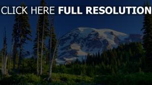 sapin montagne états-unis