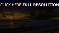 mer mouette coucher du soleil nuageux pays-bas
