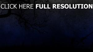 nuit arbre foncé étoile
