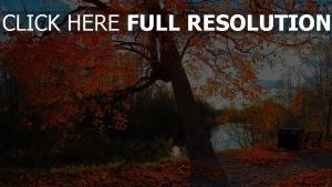 parc arbre automne romantique