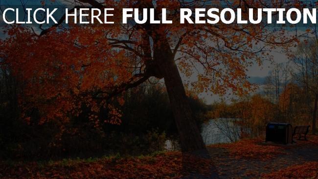 fond d'écran hd parc arbre automne romantique