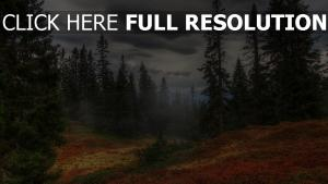 sapin parc national de yellowstone nuageux