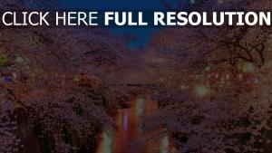 tokyo sakura nuit illuminée