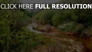 rivière hongrie forêt