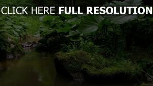 buisson gros plan forêt