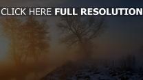 arbre brouillard lever du soleil neige