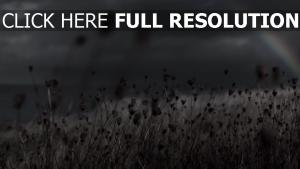 champ arc en ciel flou