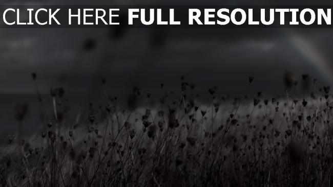fond d'écran hd champ arc en ciel flou