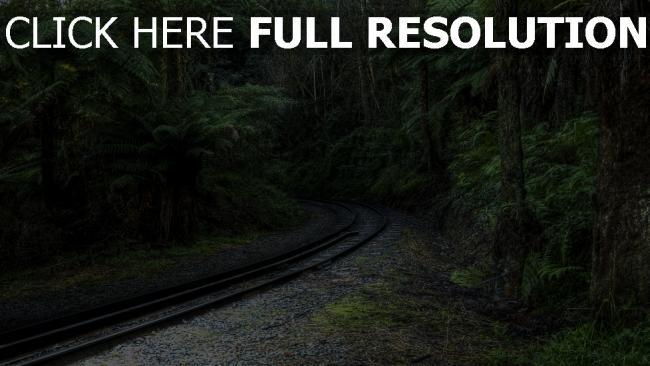 fond d'écran hd chemin de fer forêt suisse