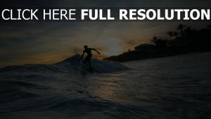 canaries surf silhouette