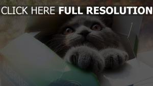chat museau moelleux