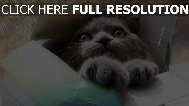 fond d'écran hd chat museau moelleux
