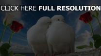 colombe baiser rose ciel