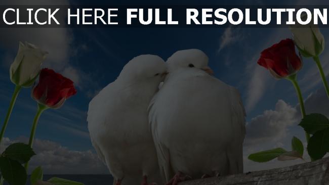 fond d'écran hd colombe baiser rose ciel