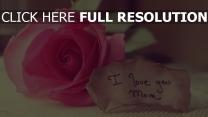 rose inscription romantique