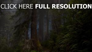 forêt parc national de yellowstone brouillard