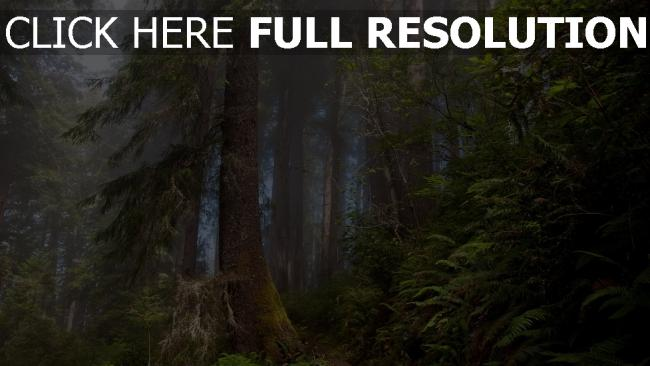 fond d'écran hd forêt parc national de yellowstone brouillard