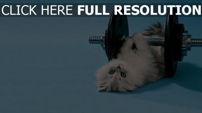 fond d'écran hd chaton haltère museau entraînement